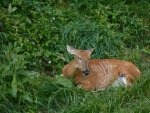 deer incident July 10 2016 009.jpg